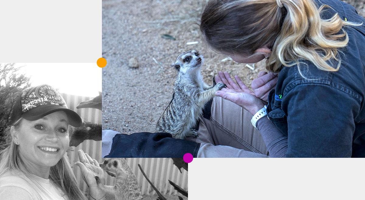 meerkat-image-left